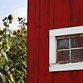 Behind The Barn by Rebecca Cozart