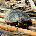 Behold The Turtle by Anita Hiltz