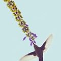 Beija-flor by Ana Francisconi