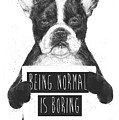 Being Normal Is Boring by Balazs Solti