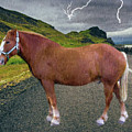 Belgian Horse by Ericamaxine Price