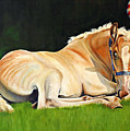Belgian Horse Foal by Toni Grote