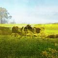 Belgian Spring Landscape by Ariadna De Raadt