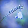 Bell Flower by Beth Riser