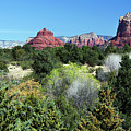 Bell Rock View 7650-101717 by Tam Ryan