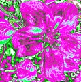 Bella Flora 2 by Will Borden