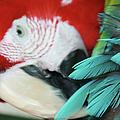 belle Ara Macao oiseaux tropicaux de Maui  by Sharon Mau