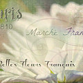 Belles Fleurs by Kathy Bucari