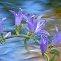 Bells Over Water by Barbara St Jean
