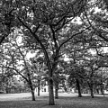 Beloit College Oak Grove by University Icons