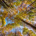 Below Autumn Maples by Chris Bordeleau