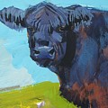 Belted Galloway Cow Head by Mike Jory