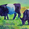 Belted Galloway Cows Grazing by Mike Jory