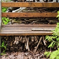 Bench And Wood Pile by Deborah Brown