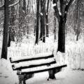 Bench In Snow by Wim Lanclus