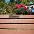 Bench In Steelhead Park by Tom Cochran