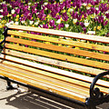Bench In The Tulips by Terri Morris