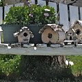 Bench Of Birdhouses by Susie Fisher