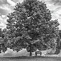Bench Under A Tree by Larry Braun