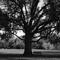 Bench Under Oak by David Lee Thompson