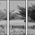 Bench View Triptic by Tom Romeo