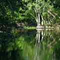 Bend Of The Ocklawaha River by Bob Johnson