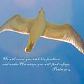 Under His Wings IIia by Susan Molnar