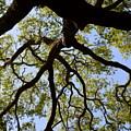 Beneath The Oak by Linda Covino