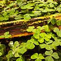 Beneath The Redwoods by Vivian Christopher