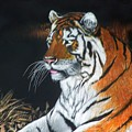 Bengal Boy  Sold by Jack Bolin