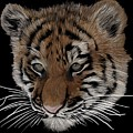 Bengal Tiger Cub by Nathan Hoffmann