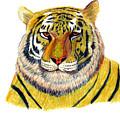 Bengal Tiger by Frederic Kohli