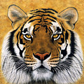 Bengali II by Lawrence Supino