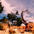 Bent The Grand Canyon by Tom Prendergast