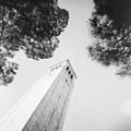 Berkeley Campanile by Ana V Ramirez