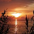 Bermuda Evening by Gina Sullivan