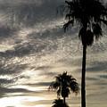 Bermuda Palms by Gina Sullivan