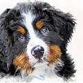 Berner-sennenhund by Marina Meedo
