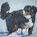 Bernese Mountain Dog In Drift by Lee Ann Shepard