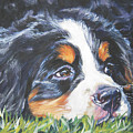 Bernese Mountain Dog In Grass by Lee Ann Shepard