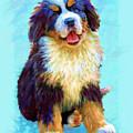 Bernese Mountain Dog by Jane Schnetlage