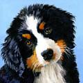 Bernese Mountain Puppy by Alice Leggett