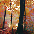 Bernharts Dam Fall 031 by Scott McAllister