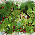 Berries And Leaves 51 by Ericamaxine Price