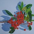 Berries by Constance Drescher