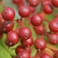 Berries by Heidi Poulin