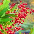 Berries Macro by Amie Ebert