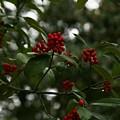 Berries by Ryan Johnson
