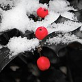Berries In Snow by Shannon Turek