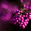 Berries Still Life by Mike Reid
